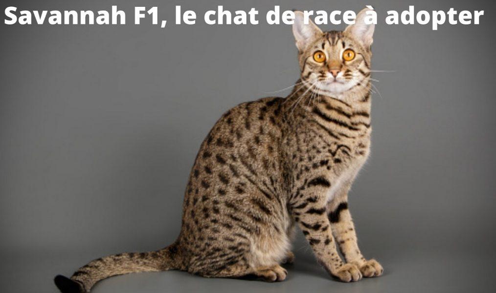 Savannah F1